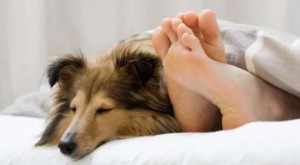 if-you-sleep-with-your-pet-your-health-and-your-kids-heath-are-in-danger-here-is-why1-600x399