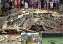 မိေက်ာင္း ကိုက္ခံရတဲ့ ႐ြာသားအတြက္ မိေက်ာင္း ၃၀၀ ကို ျပန္သတ္